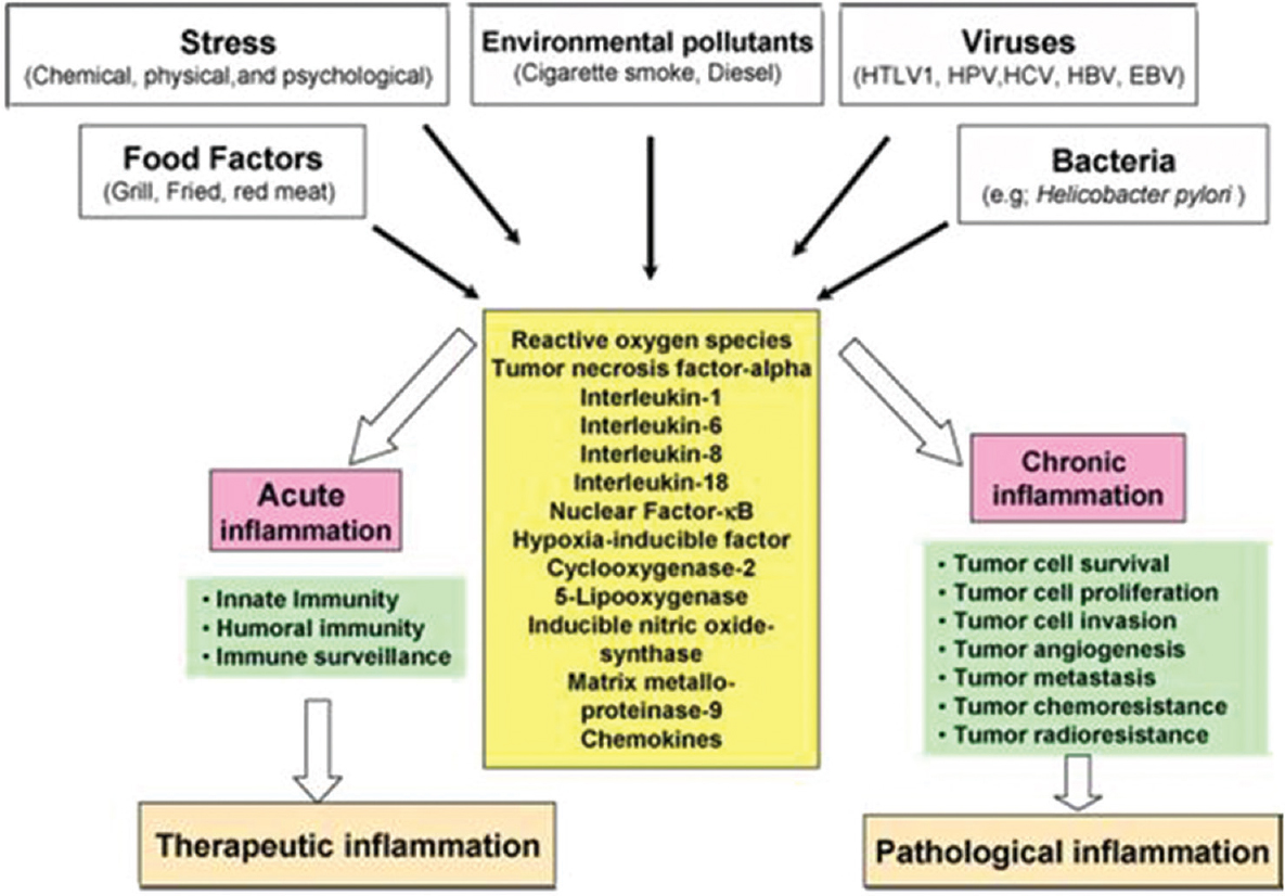 Figure 1: Different faces of inflammation and its role in tumorigenesis
